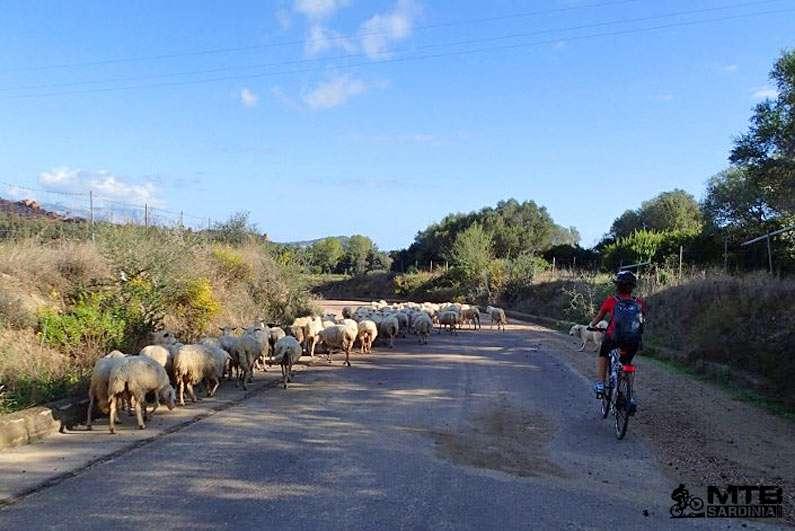 Escursioni mountain bike Sardegna